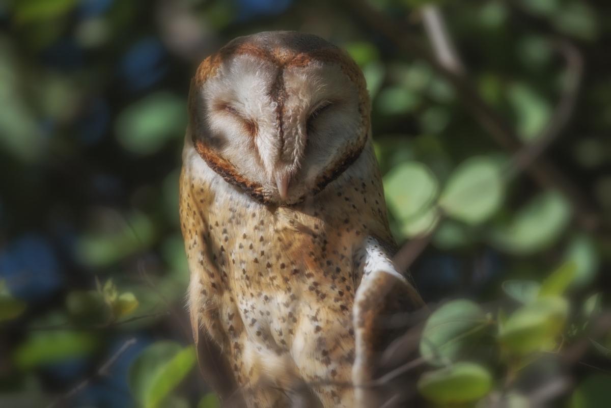 An owl's tale