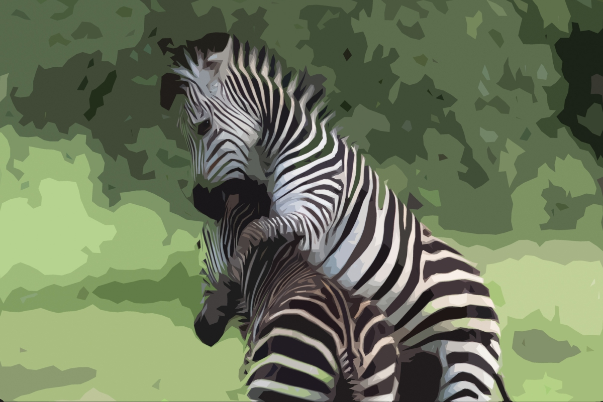 Zebra creation