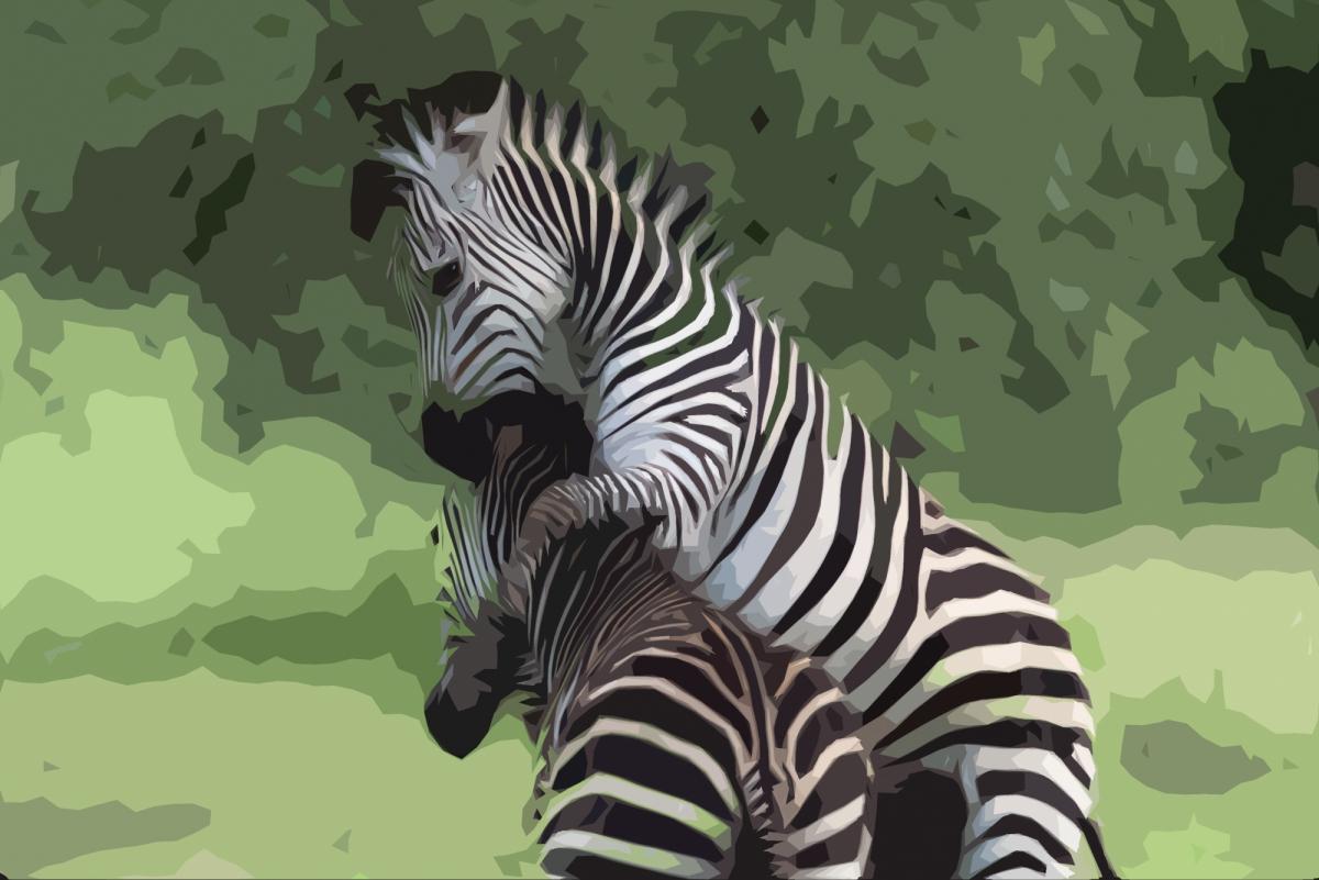 Zebra creation