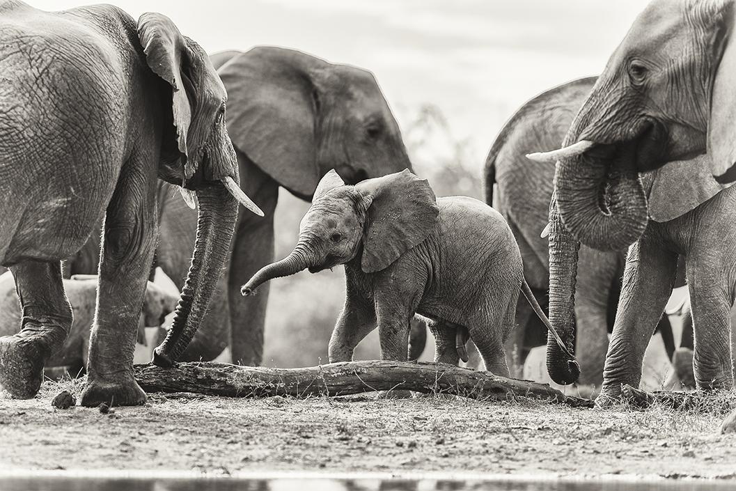 Protective elephants