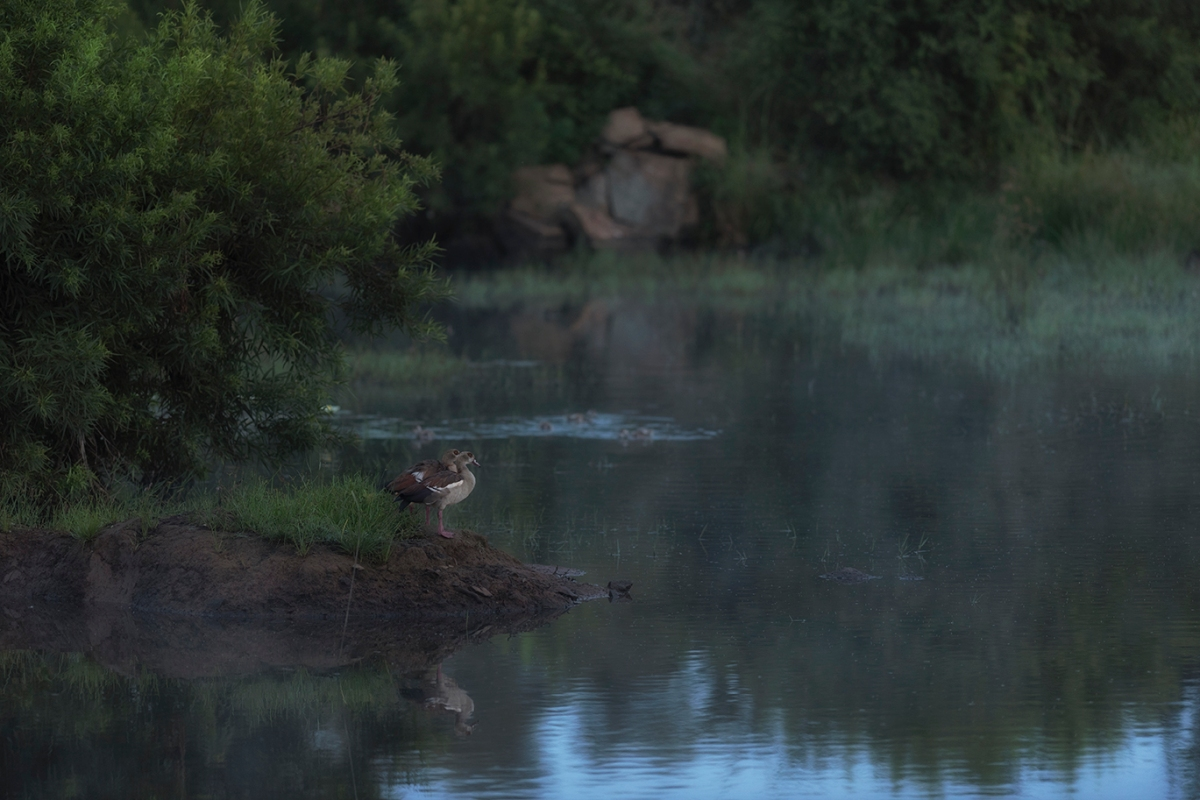 Dawn at the waterhole