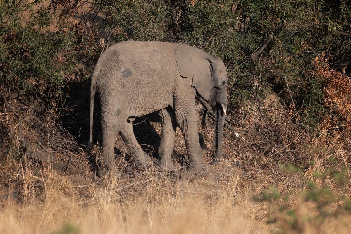 Poor baby elephant