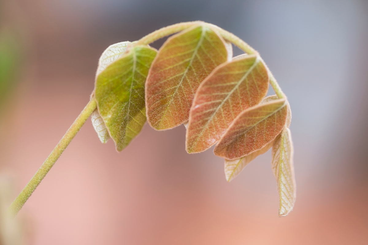 Spring leafs