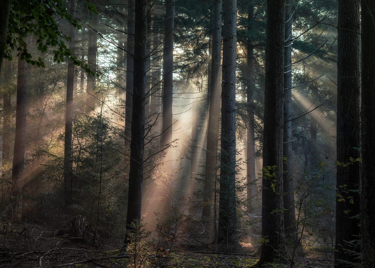Sun in theforest